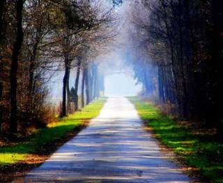 jalan-pohon-cahaya-320x262